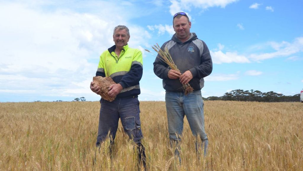 """John and Shane Rathjen with a hunk of limestone rock, one of the few of its size left in the paddock at Cambrai after being reefinated. A HEALTHY barley crop is standing on a previously non-arable paddock near Cambrai thanks to a bold management decision by Millendella father and son John and Shane Rathjen. The paddocks were littered with limestone rock, some patches worse than others, which caused major headaches in their initial seeding and ploughing attempts. After a couple of years of frustration and not being able to crop the new block, the Rathjens opted to try a Reefinator - a sled with hardened tines mounted in front of a cylindrical ribbed roller that is pulled behind a tractor and designed to rip and shatter surface rock. """"We had seen the Reefinator on the internet, went to a field day and spoke to a couple of guys - one who makes them over in WA and another who said we wouldn't look back,"""" Shane said. """"It has turned land into productive land because we wouldn't have been able to sow it otherwise. """"If you have a wind on the harder ground, the crop blows over, whereas on this, the reefinating has allowed the root systems to go downwards and create a stronger network."""""""